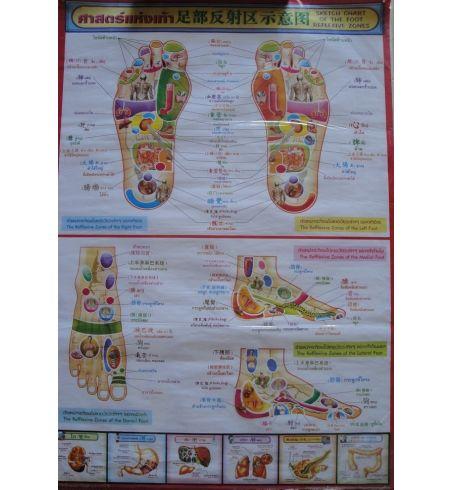 Poster Massage N°1 Réflexologie des pieds