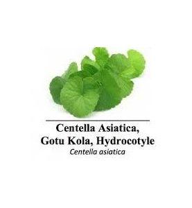 Centella Asiatica ( mémoire, hypertension)